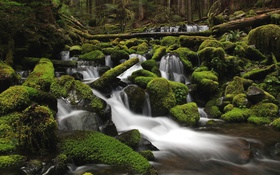 Обои зелень, лес, вода, река, камни, мох