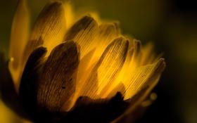 Обои цветок, макро, свет