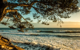 Обои прибой, Франция, берег, ветки, дерево, море, волны