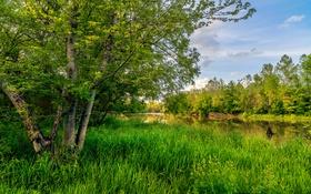 Обои зелень, лето, трава, деревья, США, речка, Missouri