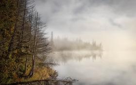 Обои лес, туман, озеро