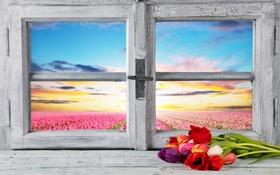 Обои цветы, весна, окно, тюльпаны, flowers, tulips, spring