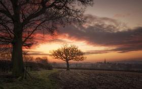 Обои деревья, закат, природа
