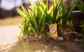Обои трава, листья, время, часы, растения, циферблат