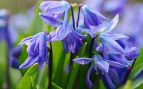 Обои макро, весна, первоцвет