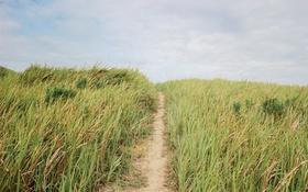 Обои небо, трава, голубое, дорожка, тропинка