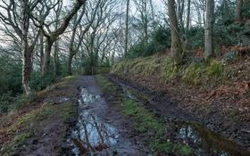 Обои дорога, природа, весна