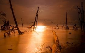 Картинка море, деревья, ночь