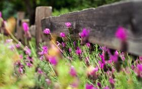 Обои цветы, природа, забор