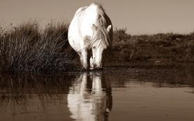 Картинка природа, река, конь