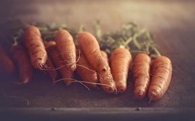 Обои еда, овощи, морковь