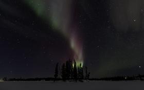 Картинка зима, звезды, деревья, ночь, северное сияние