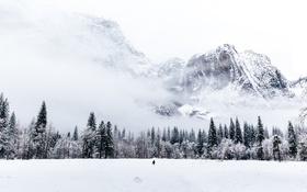 Обои человек, зима, снег, лес, Горы, деревья, метель