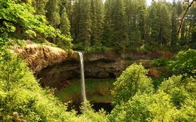 Картинка солнечно, обрыв, парк, водопад, деревья, зелень, Silver Falls State Park
