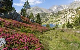 Обои трава, деревья, цветы, горы, озеро, камни, Франция