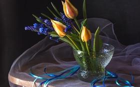 Обои лента, тюльпаны, мускари
