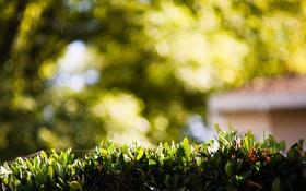 Обои листья, зеленые, боке