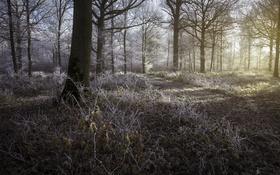 Обои лес, свет, природа