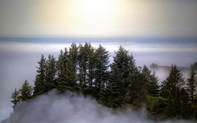 Обои небо, деревья, туман