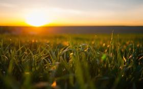 Обои поле, свет, утро