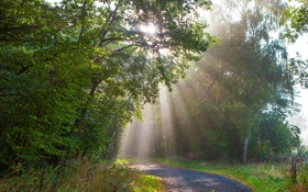 Обои лес, деревья, парк, Германия, лучи солнца, тропинка, Monreal