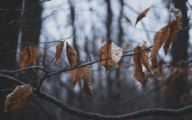 Обои осень, листья, ветки, дерево, сухие