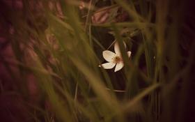 Обои цветок, трава, лепестки