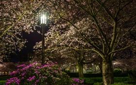 Картинка трава, деревья, цветы, ночь, парк, фонарь, кусты