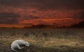 Картинка поле, ночь, собака