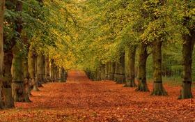 Обои дорога, осень, листья, деревья, парк, аллея