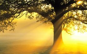 Обои лучи, свет, дерево