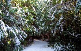 Обои снег, Ucluelet, зима, деревья, Канада, лес