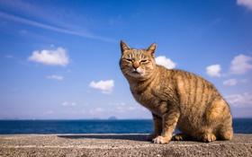 Обои небо, кот, взгляд, фон