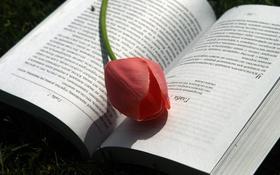 Обои тюльпан, весна, книга