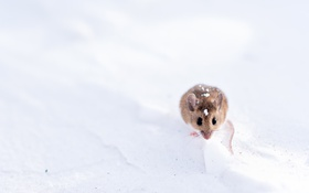 Обои природа, фон, мышка