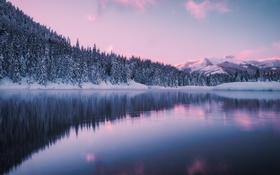 Картинка лес, природа, озеро
