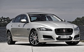 Картинка белый, Jaguar, ягуар