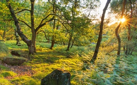 Обои зелень, лес, трава, деревья, парк, камни, Великобритания