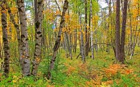 Обои осень, лес, деревья