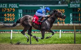 Обои спорт, гонка, конь