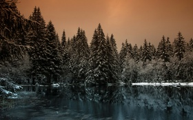 Обои лес, ночь, озеро
