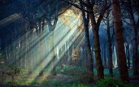 Обои лучи, свет, Деревья