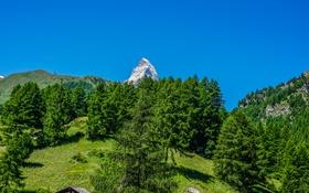 Картинка зелень, лето, небо, солнце, деревья, горы, голубое