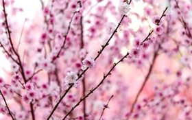 Обои ветки, розовый, весна, слива