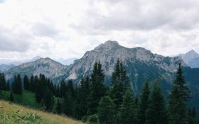 Обои деревья, горы, Альпы