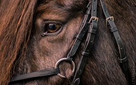 Обои horse, head, fur