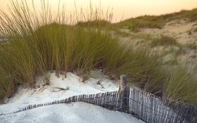 Картинка трава, природа, дюны