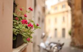 Обои цветы, город, улица