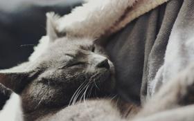 Обои кот, шерсть, спит