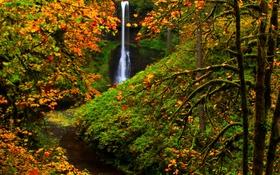 Картинка водопад, деревья, Silver Falls State Park, осень, лес, США